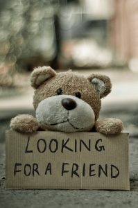 bear looking for a friend