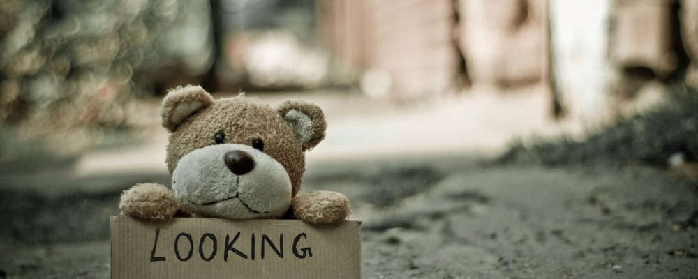 bear holding a sign